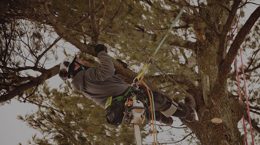 Treder Tree Inc: Emergency tree removal in McPherson, Lindsborg and Hutchinson