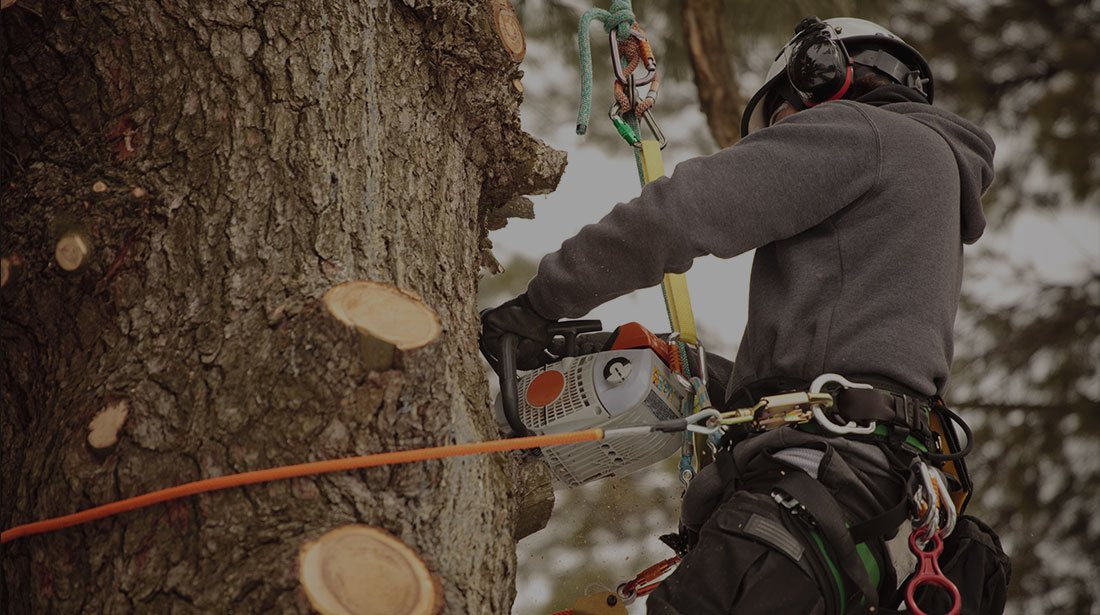 Treder Tree Inc: Stump and tree removal in McPherson, Lindsborg and Hutchinson