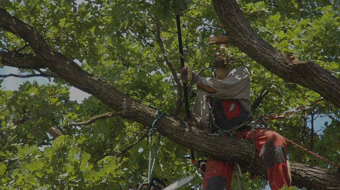 Treder Tree Inc: Tree cabling and bracing in McPherson, Lindsborg and Hutchinson