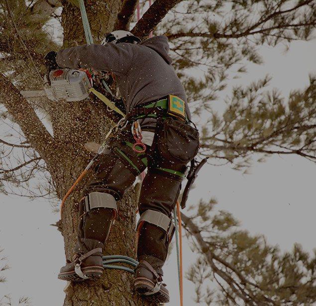 Treder Tree Inc: Tree health in McPherson, Lindsborg and Hutchinson