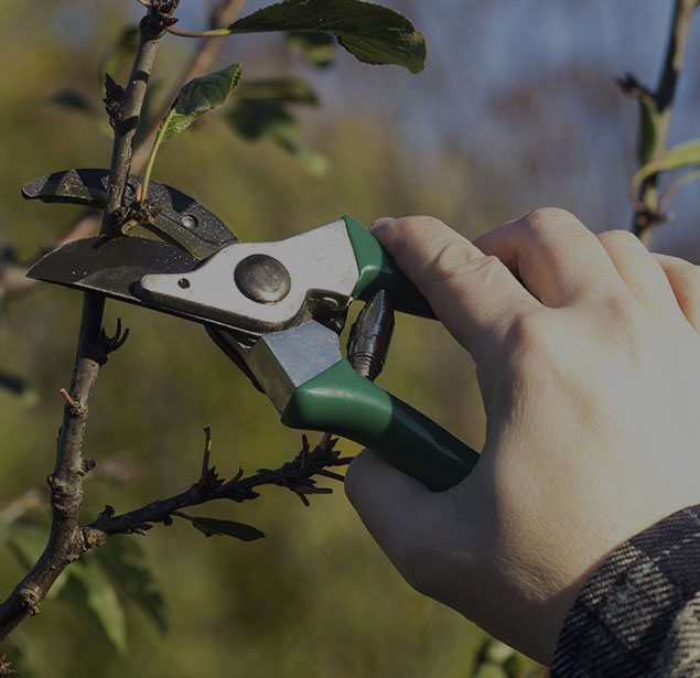 Treder Tree Inc: Tree pruning in McPherson, Lindsborg and Hutchinson